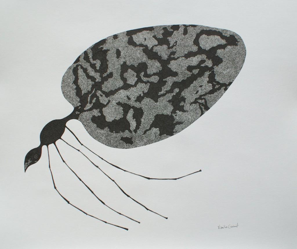 Insecte d'eau