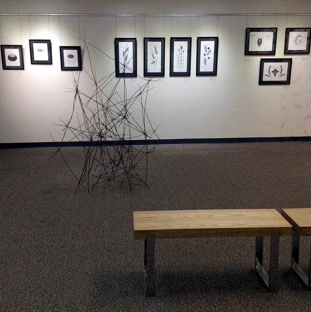Arbustes (installation)