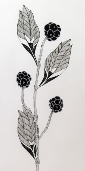 Plante IV