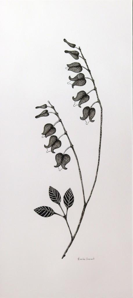 Plante II